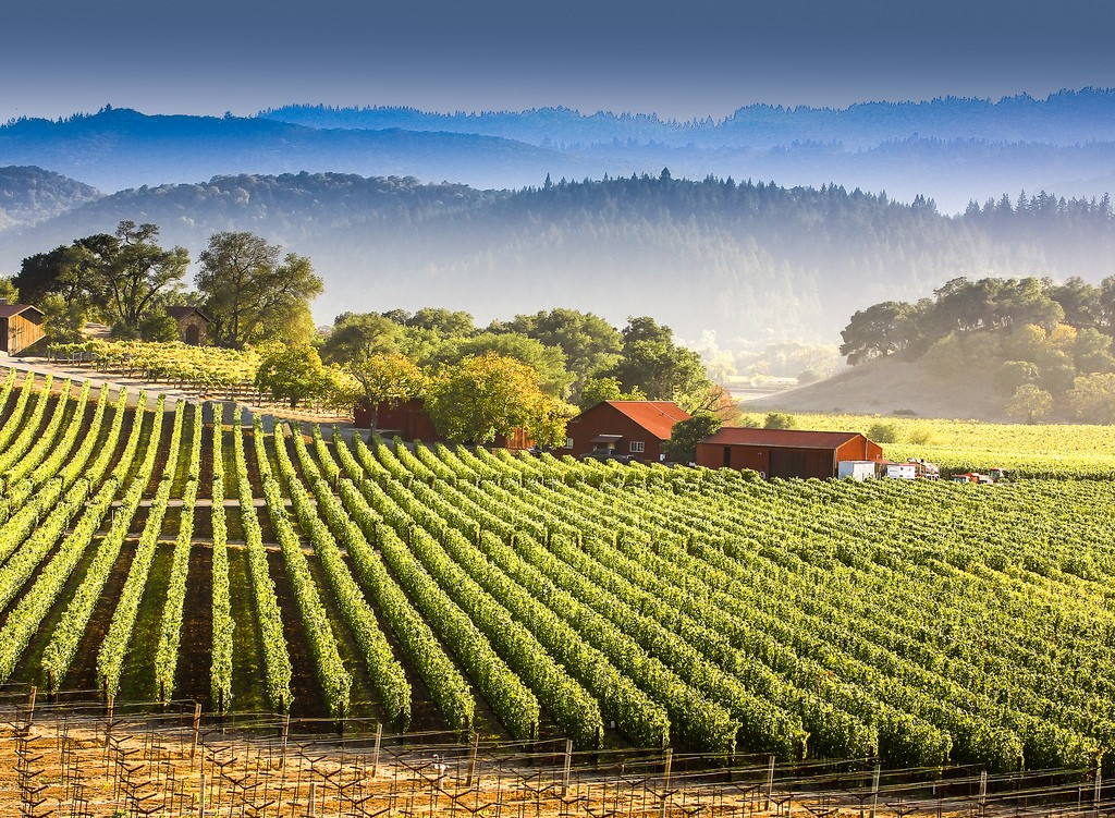 Studiare il vino Napa Valley