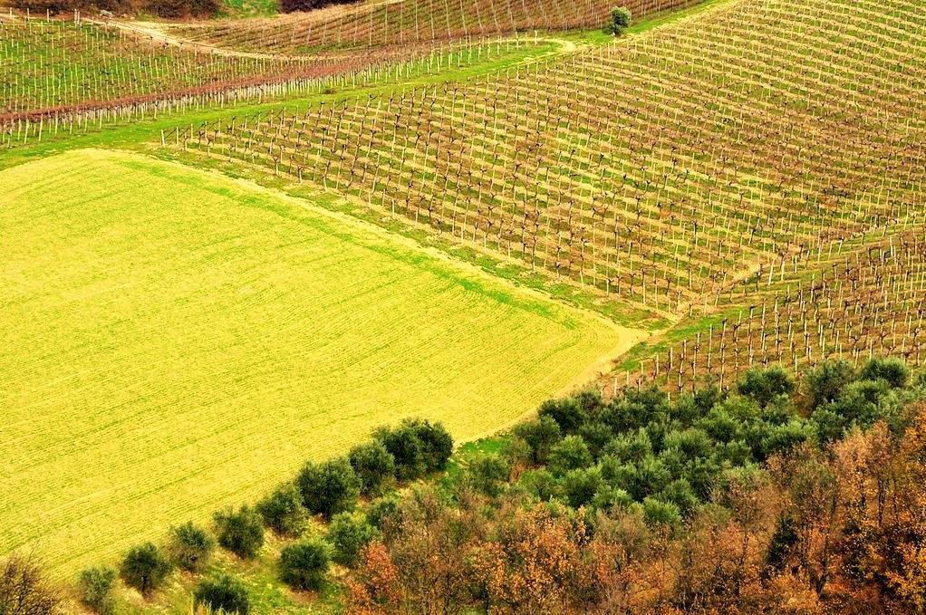 Assoenologi - Abruzzo vigne