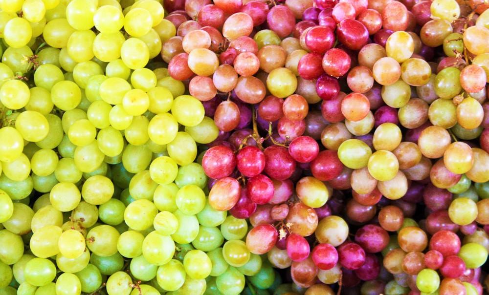 Assoenologi - produzione uva
