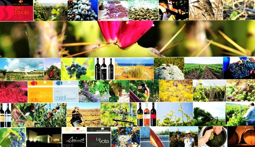 vino social - Flickr marilena barbera