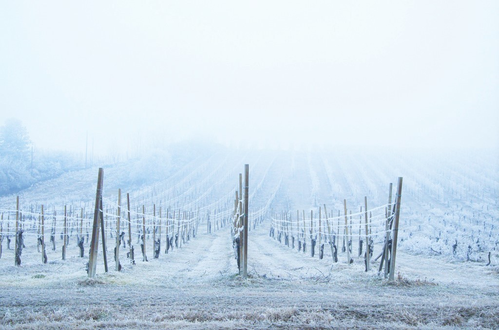 vino - vigne neve