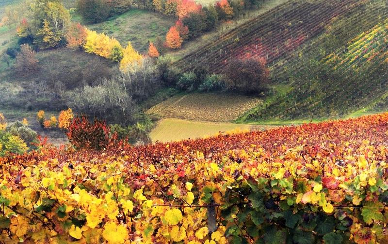 Cantine Aperte vigne-piemonte