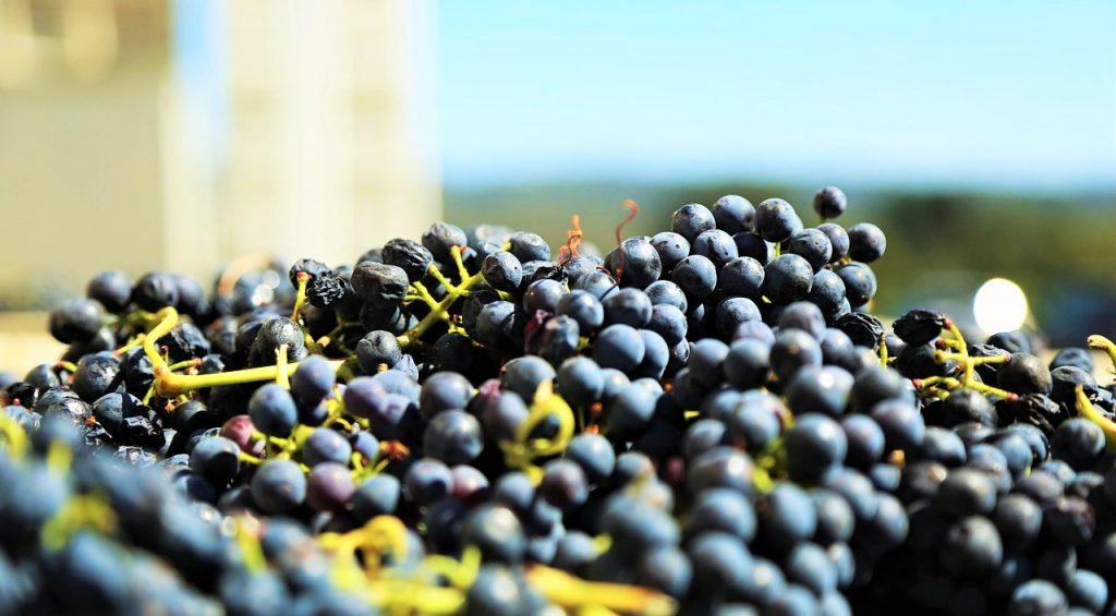 Cantine Aperte uva-generica