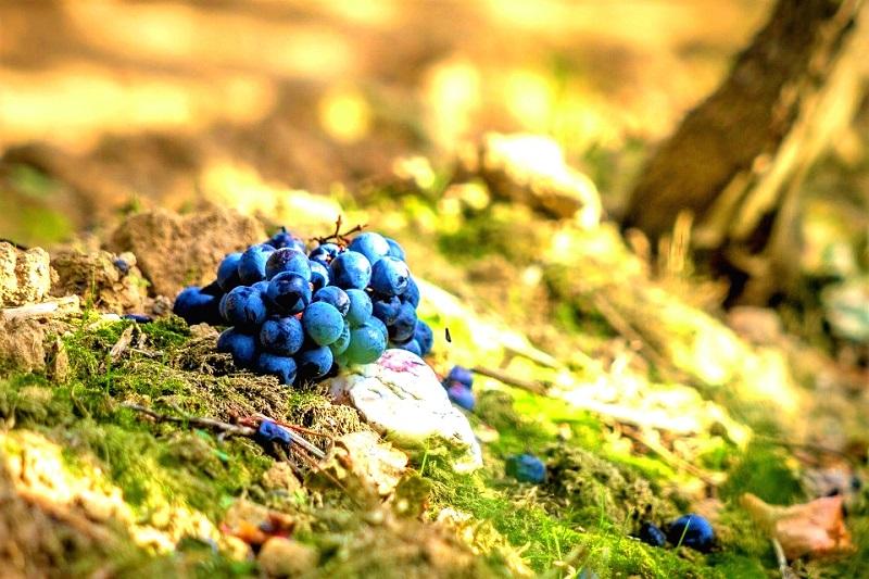 assaggiatori-curiosi-viticoltura