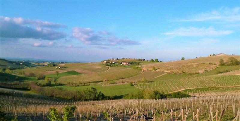 monferrato-nebbiolo-doc-paesaggio