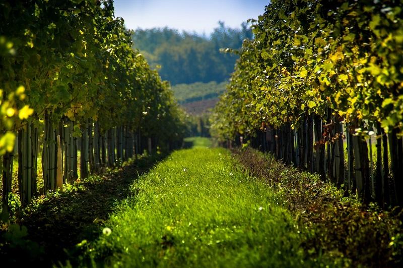 cooperazione vino the wine net