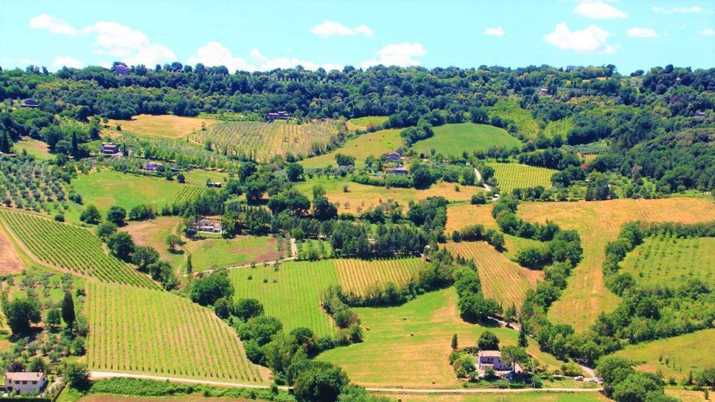 Simposio dell'enoturismo vigne