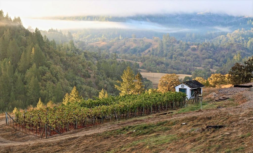 Sostenibilità del vino california