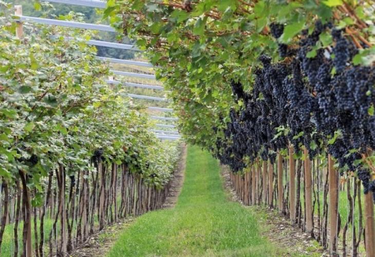 Trentino di-vino marzemino