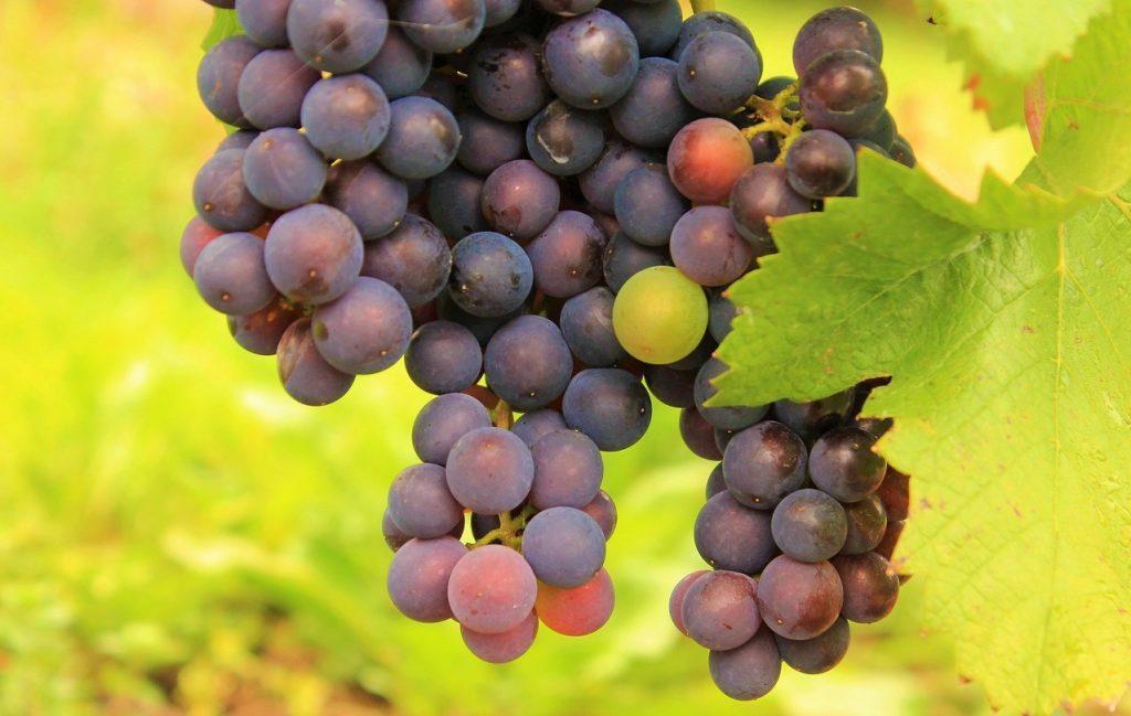 vitigni rari uva a bacca-rossa