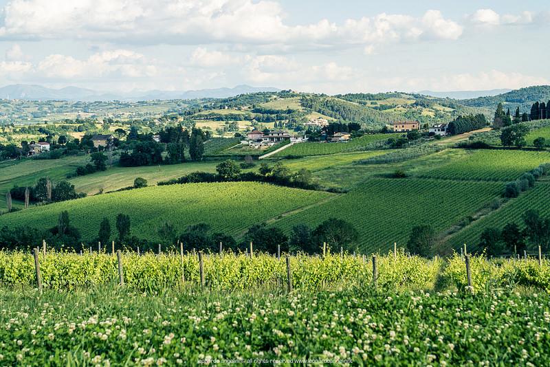 vigneti storici - panorama vitivinicolo montefalco