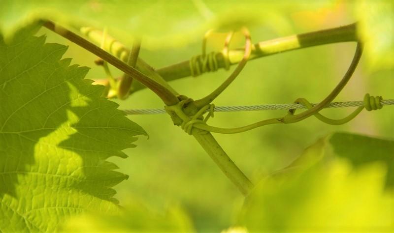 Best italian Wine Awards biodiversita
