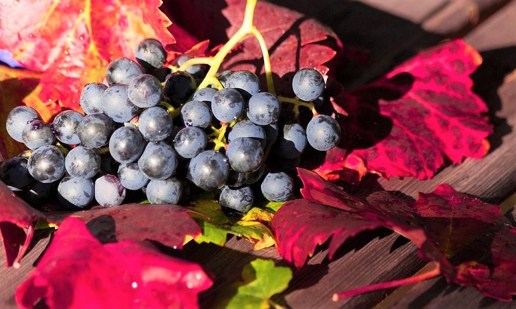 Cantine aperte san martino movimento turismo vino