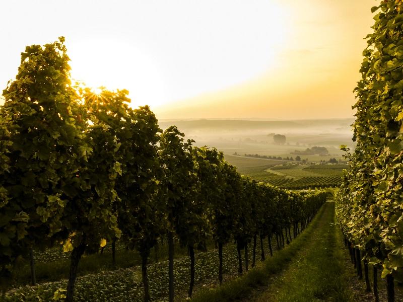 slow wine2018 sostenibilità