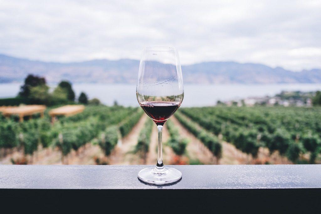 slow wine 2018 guida