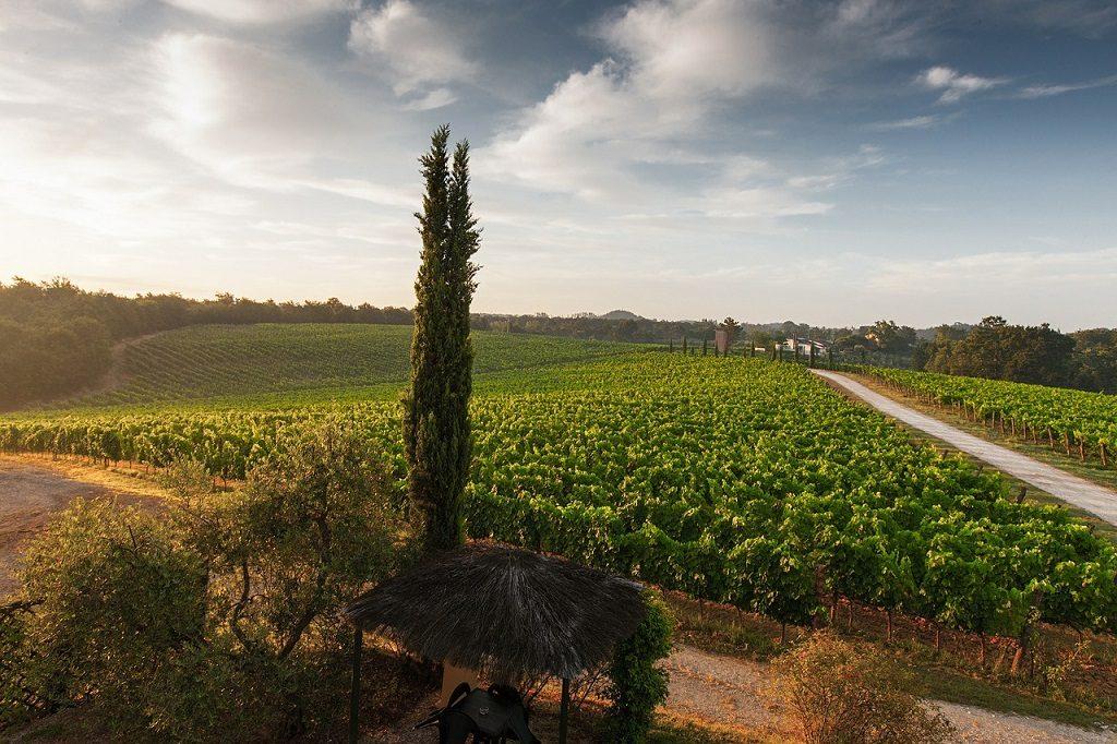 enoturismo visit tuscany