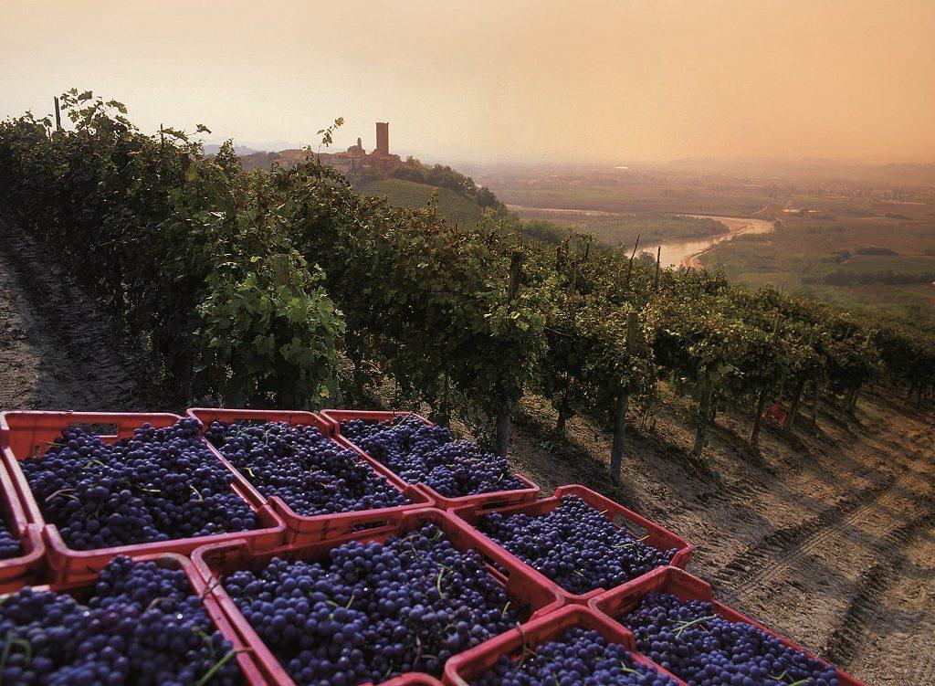 grapes in town vendemmia-piemonte