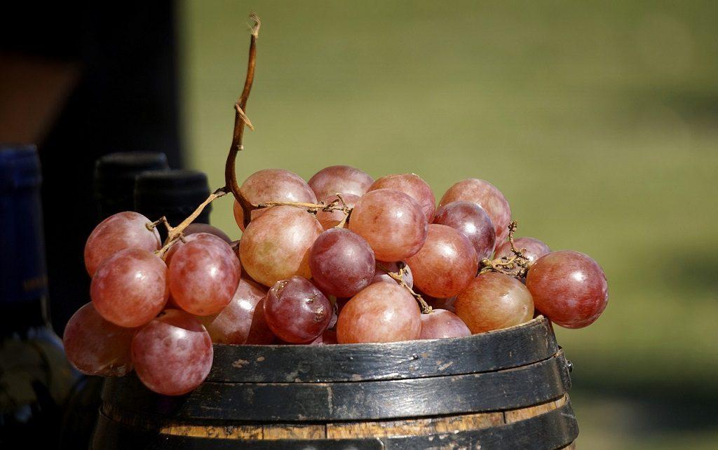 Export vino competitor