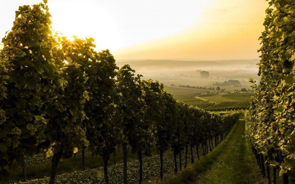 vino bio e scienza Merano Wine Festival