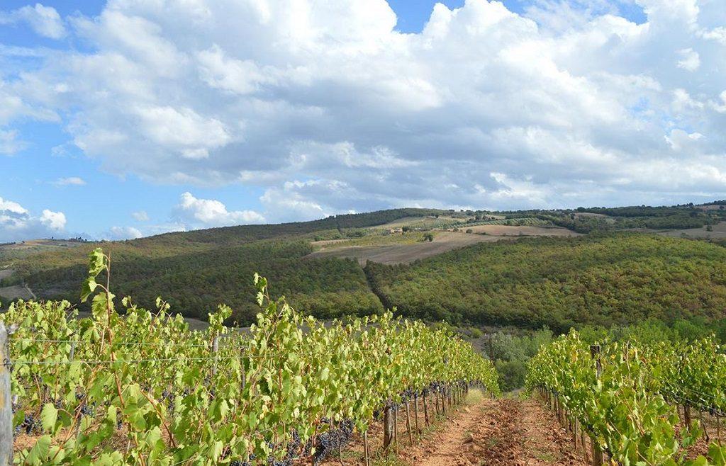 Wine Spectator top 100 casanova-neri