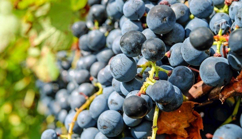 Wine Spectator top 100 vini italiani