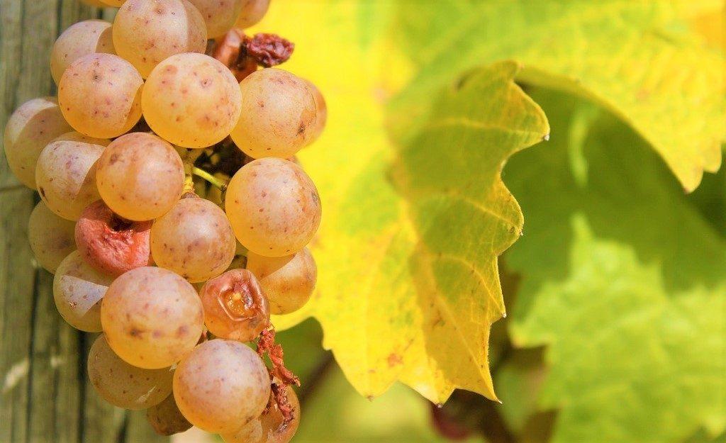 merano wine festival sostenibilità