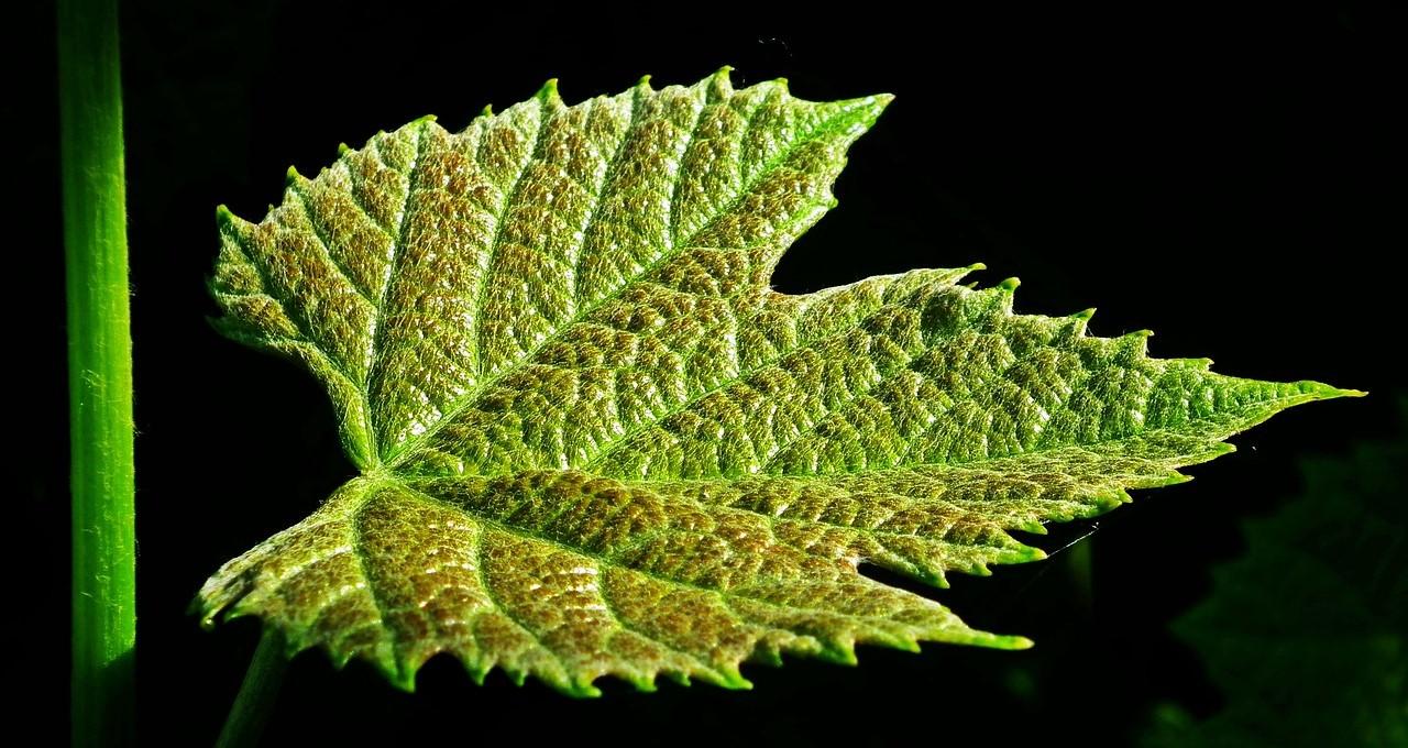 elogio del vino italiano varietà