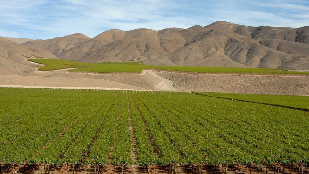 vigneti ecosistema chile